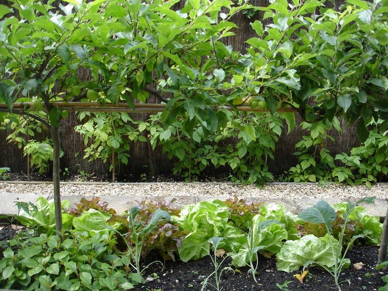 Geheime tuinen in rotterdam buitenskamers tuinontwerpen for De tuinen rotterdam